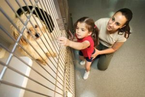 adopting a dog from the SPCA