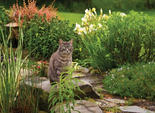 landscaping for happy cats