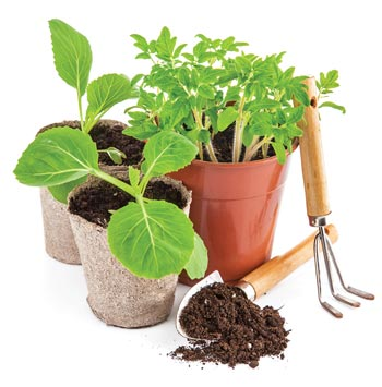 potted plants for spring  planting