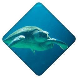 4-turtle
