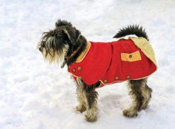 dog wearing a winter coat