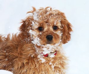 puppy outside playing in snow