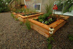 Vegetable Garden in your back yard