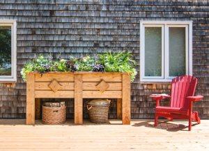 Kitchen Garden | Vegetable Garden Basil plant