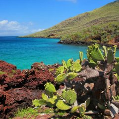 The lure of the Galapagos Islands