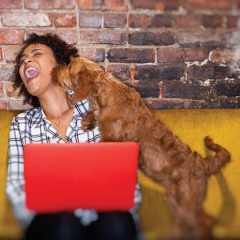 5 Tips for Bringing Your Pet to Work in the Summer
