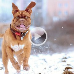 The Best All Natural DIY Winter Paw Protection For Active Dogs