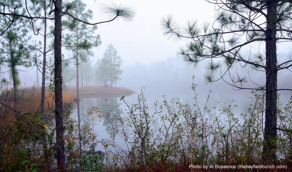 Misty Morning Moment