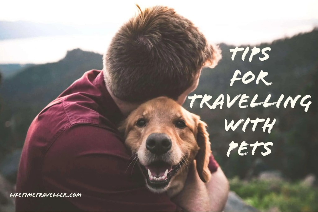 Tips for Travelling with Pets, your ultimate guide by Lifetime Traveller