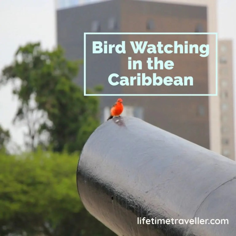 bird watching in the caribbean.