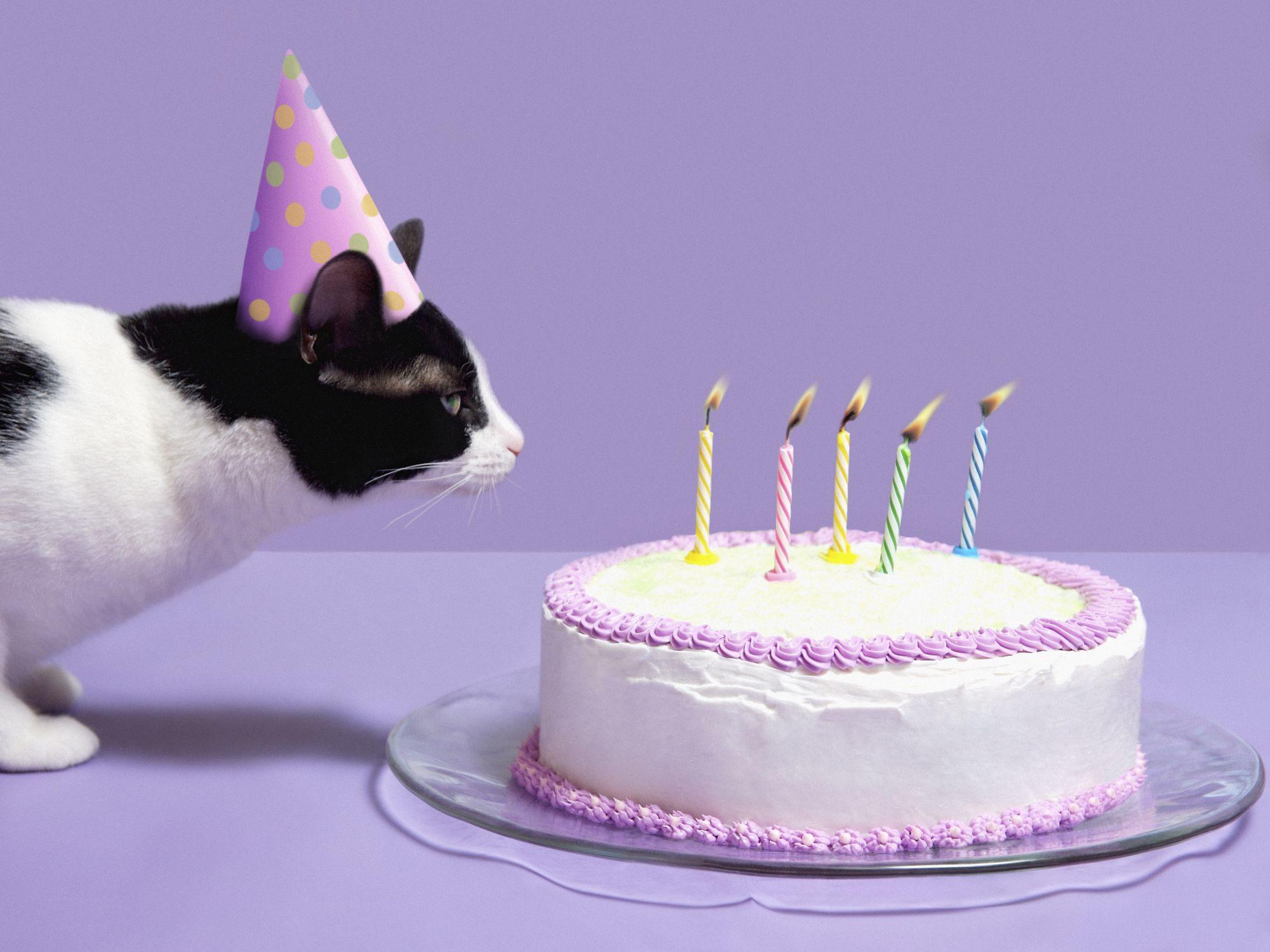 5 Year Old Birthday Cat