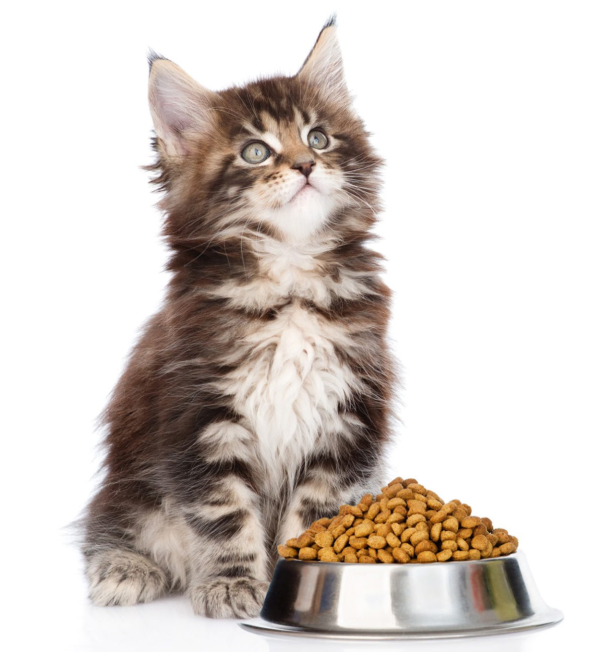 diet for maine coon
