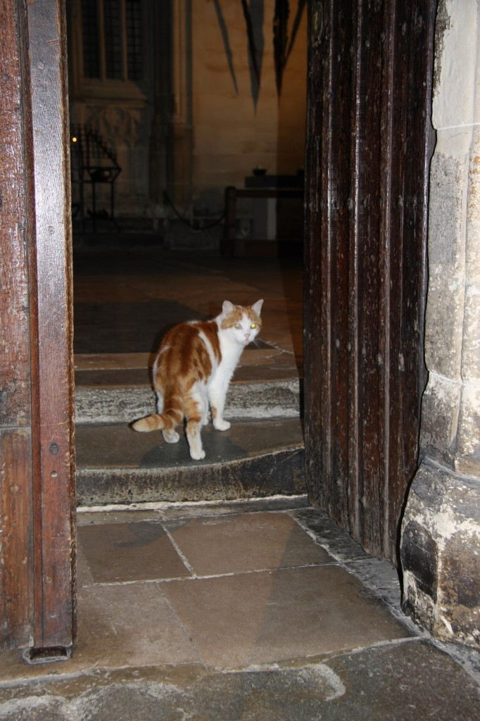 Laptop Canterbury Cathedral Cat Remembered Life With Cats