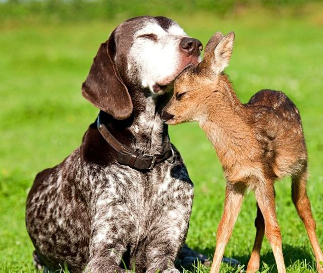 Dogs And Baby Animals2