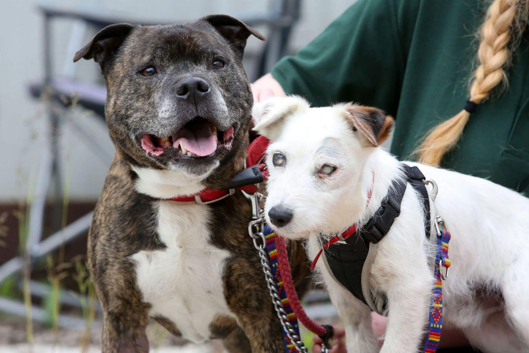 Update Blind Dog And Seeing Eye Buddy Adopted Together