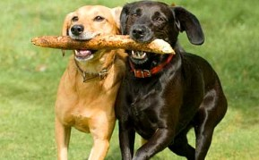 Image result for dog friends