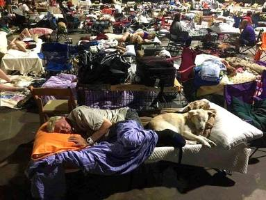 Everything dog round up : dogs taking shelter during hurricane matthew