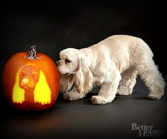 24 Pup O Lanterns To Make Your Howloween Spooktacular