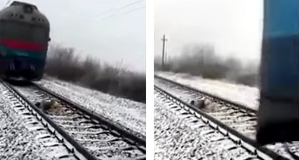 12-26-16-brave-dog-protects-injured-girlfriend-from-oncoming-train2