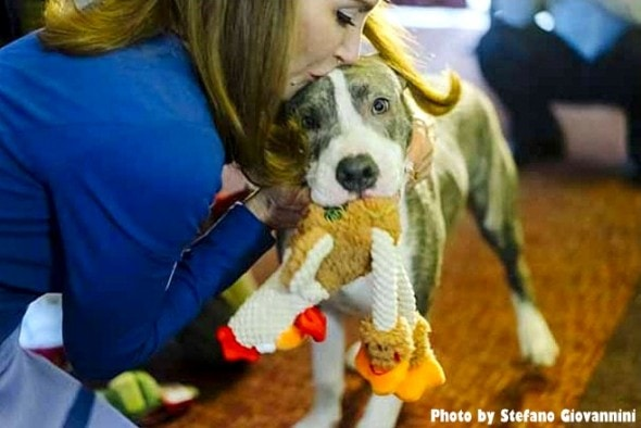 1-5-17-pit-bull-puppy-who-stopped-rape-is-honored3