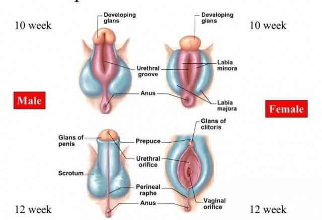 Vagina hole close up