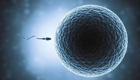 Can You Get Pregnant From Precum Precum Pregnancy Chances-3314