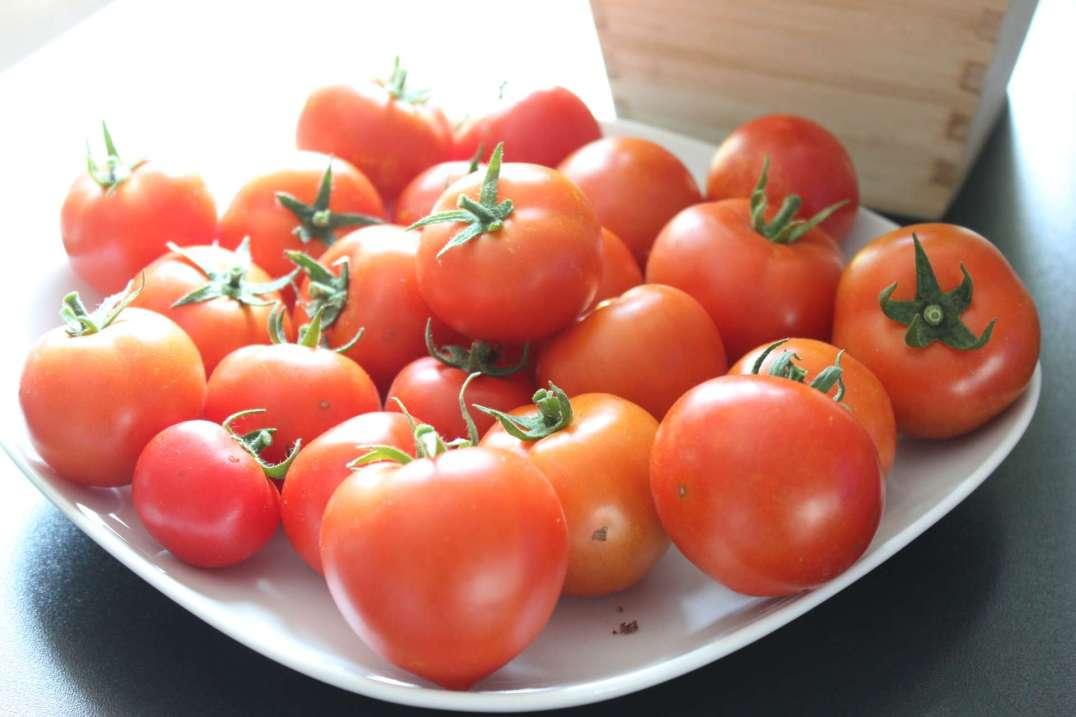Tomaten-frisch-geerntet