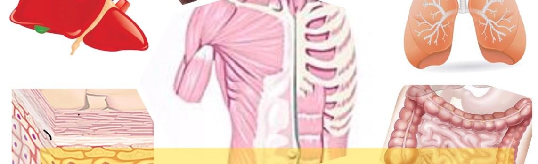 人體10個重要器官年齡,哪時開始老化?