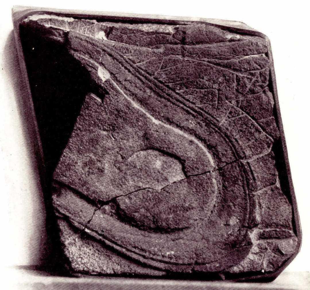 Alleged Nevada shoe print from God--Or Gorilla McCann, 1925).
