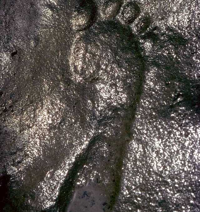 290 Million Year Old Fossil Human Footprint