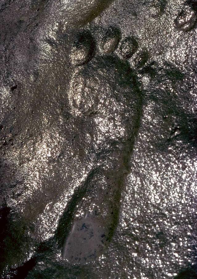 Zapata track 290 million yeer old human footprint