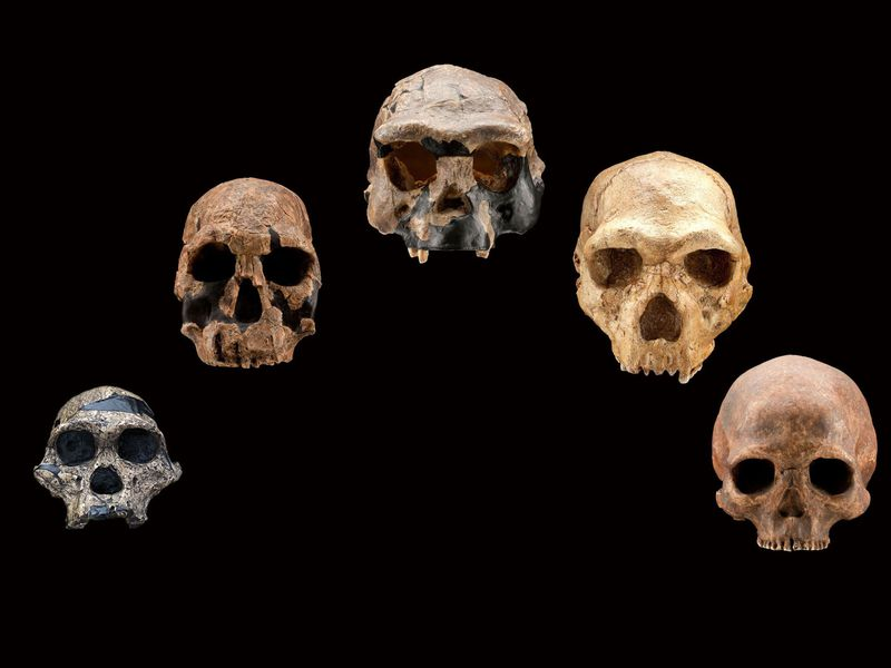 Artificial Intelligence Study of Human Genome Finds Unknown Human Ancestor