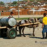 Mongolei 2003 117 - Die weiße Rose - Widerstand gegen Terror - persoenliche-meinung, offene-worte, abseits-des-alltags - offene Worte