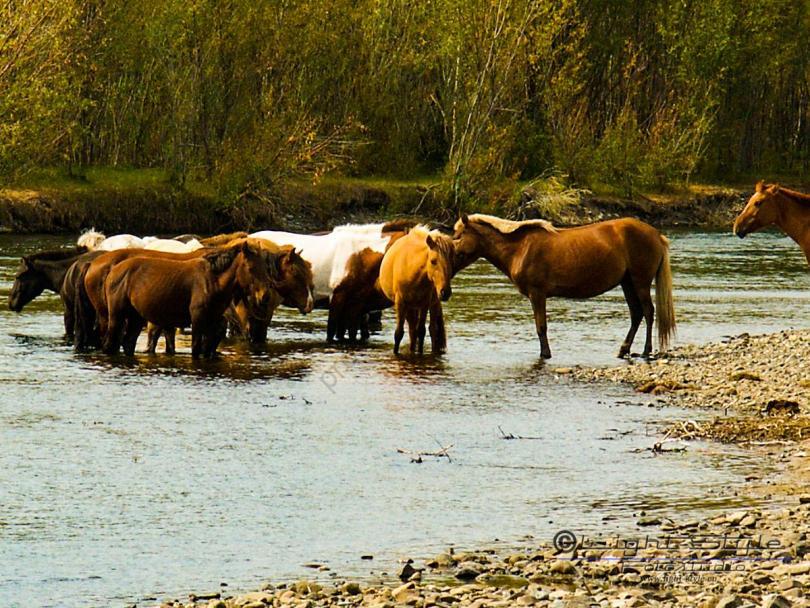 Mongolei 2003 22 - Mongolei 2003-22 - allgemein -