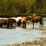 Mongolei 2003 22 - Die wilde Bestie ;-) - tierportraets, portraets, allgemein - Tierfotos, Hundeporträts, Hunde