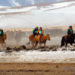 Mongolei 2003 43 - Die wilde Bestie ;-) - tierportraets, portraets, allgemein - Tierfotos, Hundeporträts, Hunde