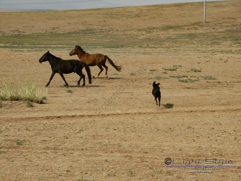 Mongolei 2003 5 - Mongolei 2003-5 - allgemein -