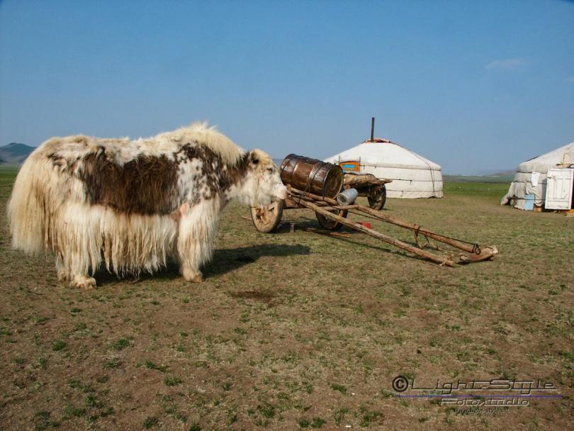 Mongolei 2003 64 - Mongolei 2003-64 - allgemein -