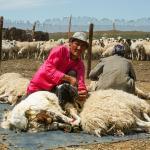 Mongolei 2003 75 - Bewerbungsfotos , wichtig oder blankes Beiwerk - allgemein - Infos, Businessporträts, Businessfotos, Bewerbungsfotos