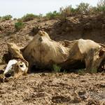 Mongolei 2003 89 - Die weiße Rose - Widerstand gegen Terror - persoenliche-meinung, offene-worte, abseits-des-alltags - offene Worte