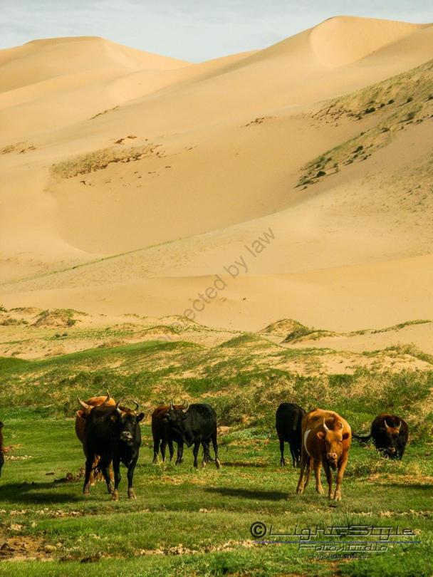 Mongolei 2003 96 - Mongolei 2003-96 - allgemein -