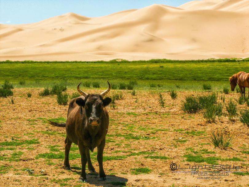 Mongolei 2003 99 - Mongolei 2003-99 - allgemein -