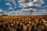 Deutsche Wüste, Lieberoser Wüste, Naturfotos, deutsche Natur, außergewöhnliche location, Die deutsche Wüste, Fotostudio Light-Style`s Blog