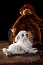 P16F0108 13 Bearbeitet - Die wilde Bestie ;-) - tierportraets, portraets, allgemein - Tierfotos, Hundeporträts, Hunde