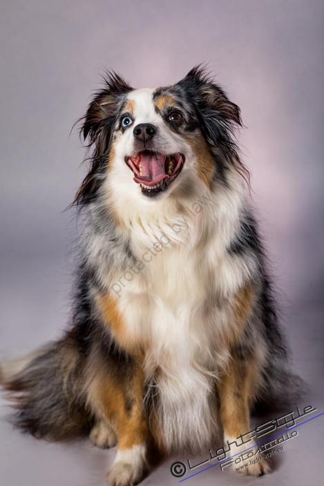 Hundefotos, Hundeporträts – mehr als langweilige Fotos, Fotostudio Light-Style`s Blog