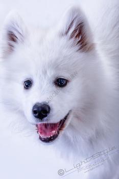 Hundeporträts, Unsere haarigen Lieblinge, Fotostudio Light-Style`s Blog