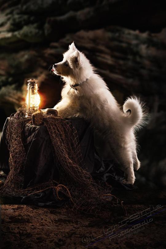 Hundeporträt Fila 11 - Hundeporträt - Fila-11 - tierportraets, allgemein -