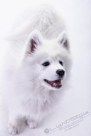 Hundeporträt - Fila-17