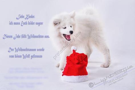 Hundeporträt Fila 19 1200x800 - Unsere haarigen Lieblinge - tierportraets, portraets, besondere-portraets, allgemein - Tierfotos, Hundeporträts, Geschenke