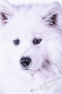 Hundeporträt - Fila-2